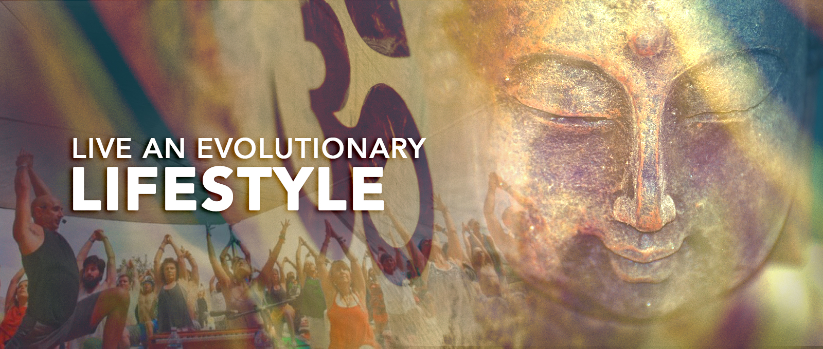 MoreLife Market – Evolutionary Lifestyle
