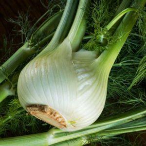 Fennel Plant